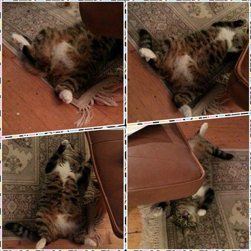Enjoying Life Katten Siri! Siri, the cat! Taking Photos