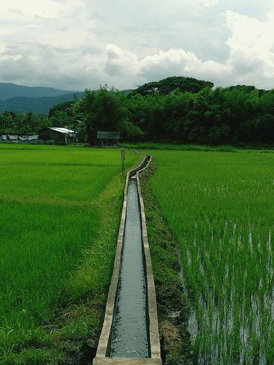 Field Fieldscape
