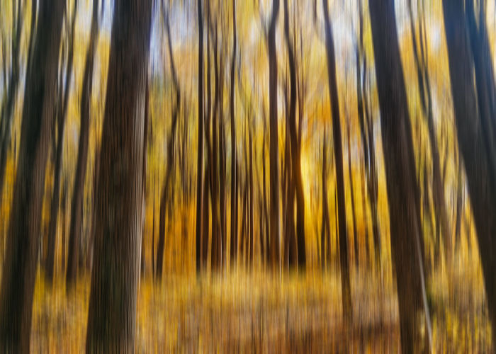 Shenandoah Shenandoah Valley - Virginia Shenandoah National Park Virginia Abstract Fall Foliage Forest Full Frame Nature No People Outdoors Peaceful Skyline Drive Tree Yellow EyeEm Ready   The Great Outdoors - 2018 EyeEm Awards