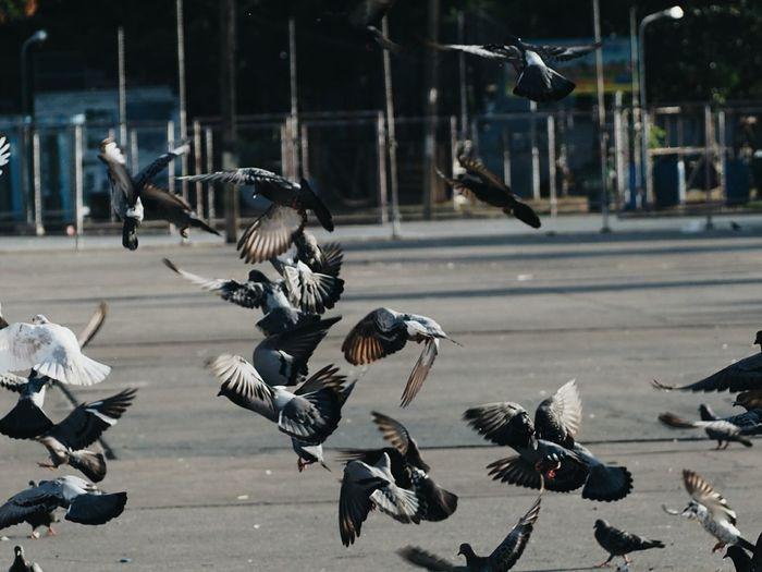 Birds flying over street