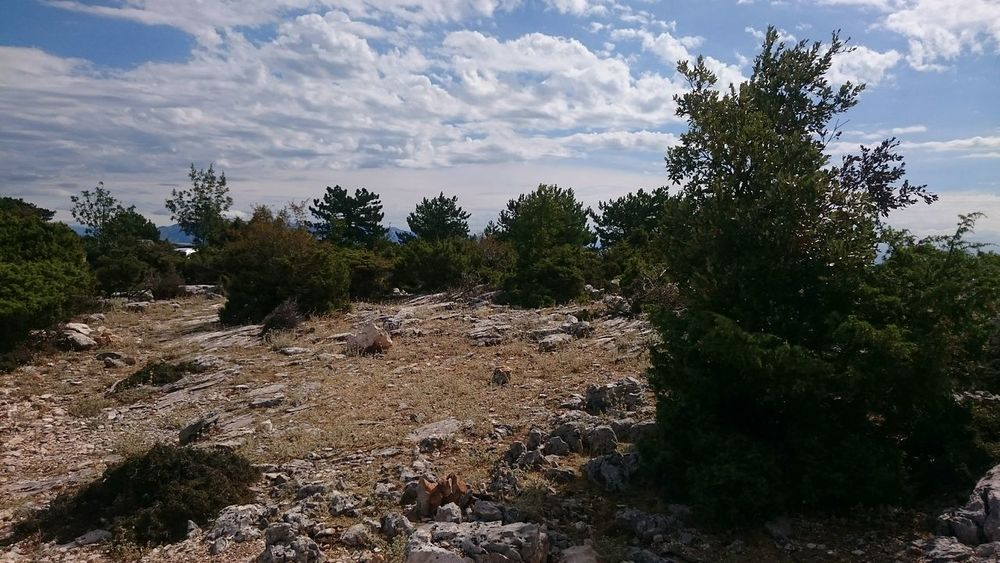 Vidova Gora Nature Photography Sky Blue Sky Trees And Sky Tree Branches Beautiful Nature Nature Beauty Stone Stones Stones N Rocks Rocks Rock Mountains Mountains And Sky Mountain Island BRAČ Islandphotography Island Leaves Nature Trees And Nature Sky And Clouds Trees Dry Grass