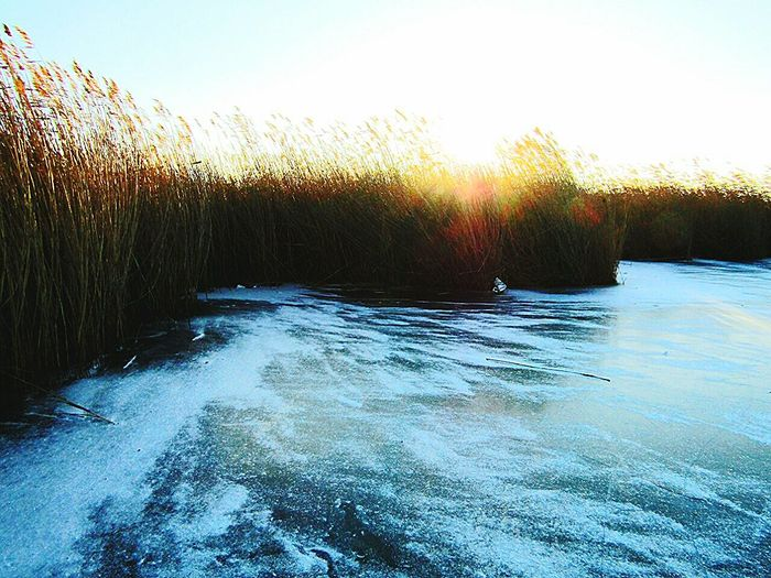 Water Nature Sunset No People Outdoors Scenics Tranquility Beauty In Nature Sky Day Freezy Cold Winter Lake Ice Velence Lake Fine Art Photography Beauty In Nature From My Point Of View Eye4photography  Todayphotography Eyeemcollection Snow Grass Sunlight