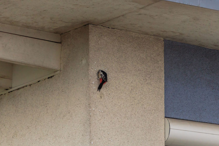 High angle view of bird on wall in building