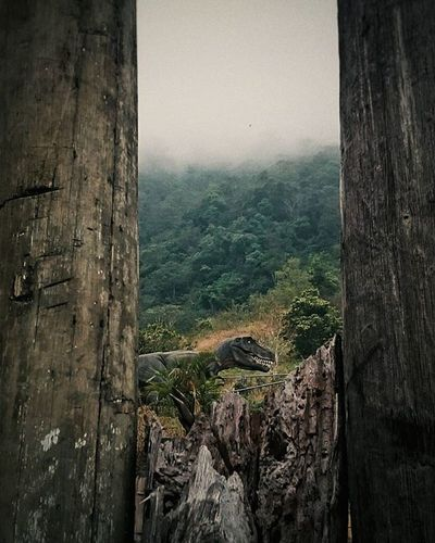 Hide and Seek Mobilephotography Dinosaur TRex  Gloomy Gloomyday  Closeencounter Baguio Philippines VSCO Vscocam Photooftheday Photography Nature Live