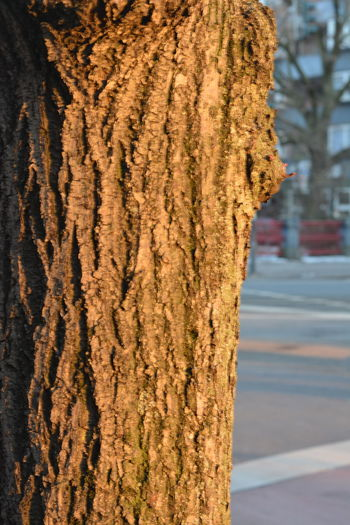Beauty In Nature Close-up Cold Temperature Day Focus On Foreground Golden Hour Golden Light Nature No People Outdoors Road Sunlight Tree Warm Light Tree Trunk