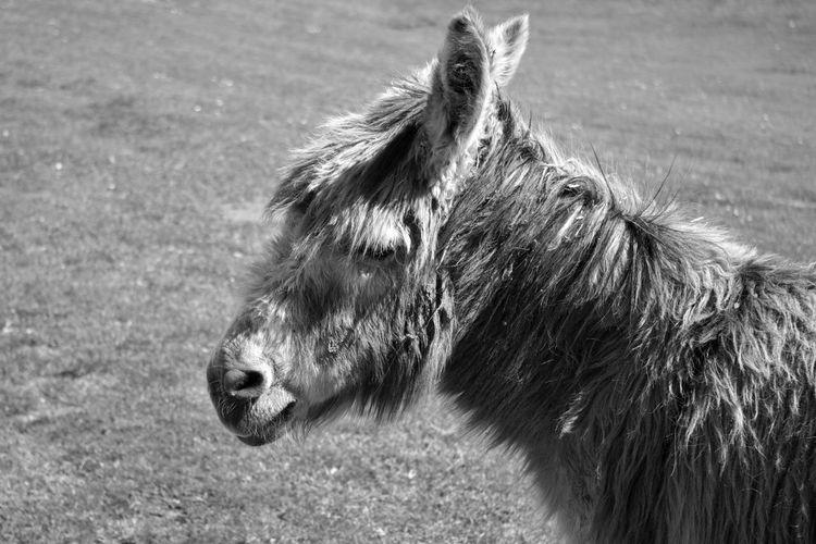 donkey in black