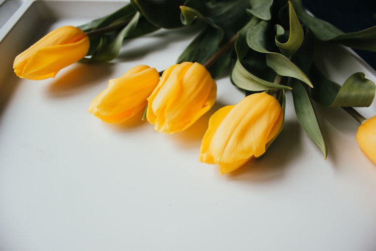 High angle view of orange roses