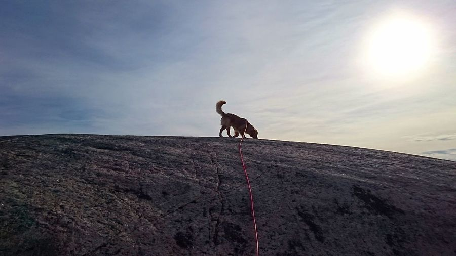 Low angle view of dog on hill against sky
