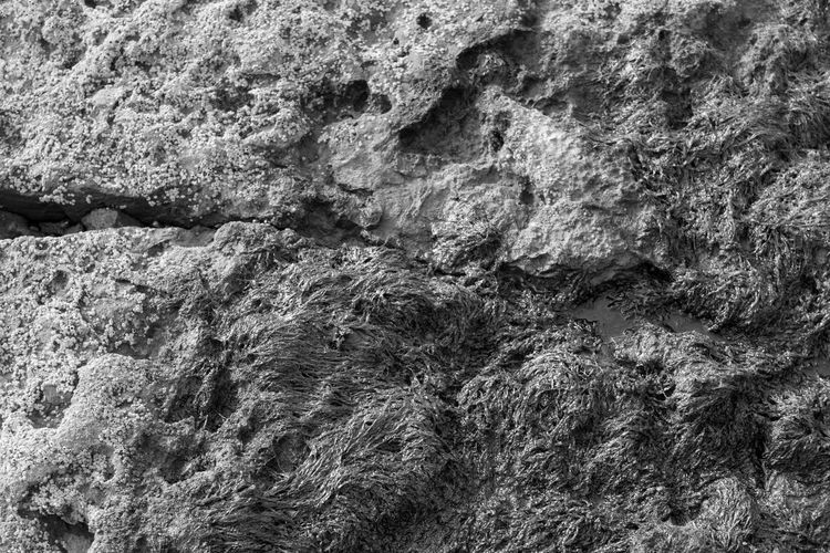 EyeEm Best Shots EyeEm Eye4photography  EyeEm Best Pics Bnw Blackandwhite Black And White Black & White Blackandwhite Photography Monochrome Backgrounds Abstract Textured  Full Frame Rock Rock - Object Close-up Rough Rock Formation Pattern Solid Nature Outdoors Sea Weed