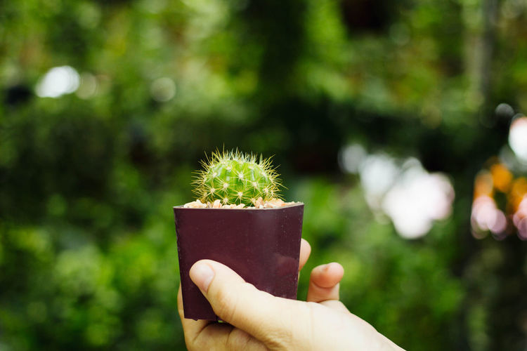 Beauty In Nature Close-up Day Focus On Foreground Freshness Green Color Holding Human Body Part Human Finger Human Hand Lifestyles Nature One Person Outdoors People Personal Perspective Plant Real People Spiked Unrecognizable Person