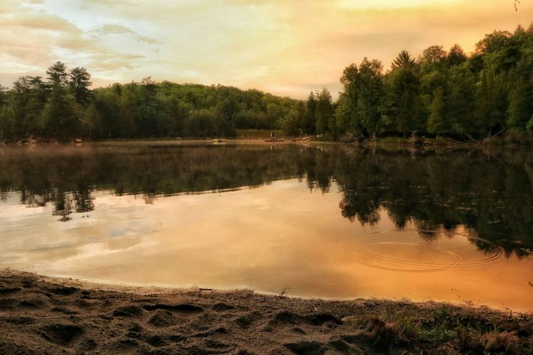 The Golden Hour Outdoors Nature Beauty In Nature Light And Shadow Riverside Riverside Beach Dramatic Sky Sunset Ontario, Canada Tree Water Sunset Gold Beauty Gold Colored Reflection Standing Water Calm Horizon Over Water Idyllic Tranquil Scene Non-urban Scene Countryside Scenics The Great Outdoors - 2018 EyeEm Awards