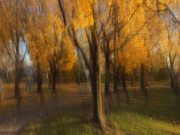 PHOTOIMPRESSIONISM Sfumato Effect Tree Nature Autumn No People Tranquility Outdoors Scenics Grass Beauty In Nature Atumn Colors Bright Light Orange Color End Of Day Sunlight Tranquility Tree Beauty In Nature