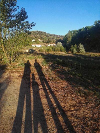 Tree Shadow Sunlight Agriculture Field Sky Landscape Long Shadow - Shadow The Traveler - 2018 EyeEm Awards