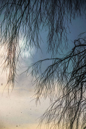 Bare Tree Beauty In Nature Branch Day Nature No People Outdoors Scenics Silhouette Sky Tranquil Scene Tranquility Tree Water