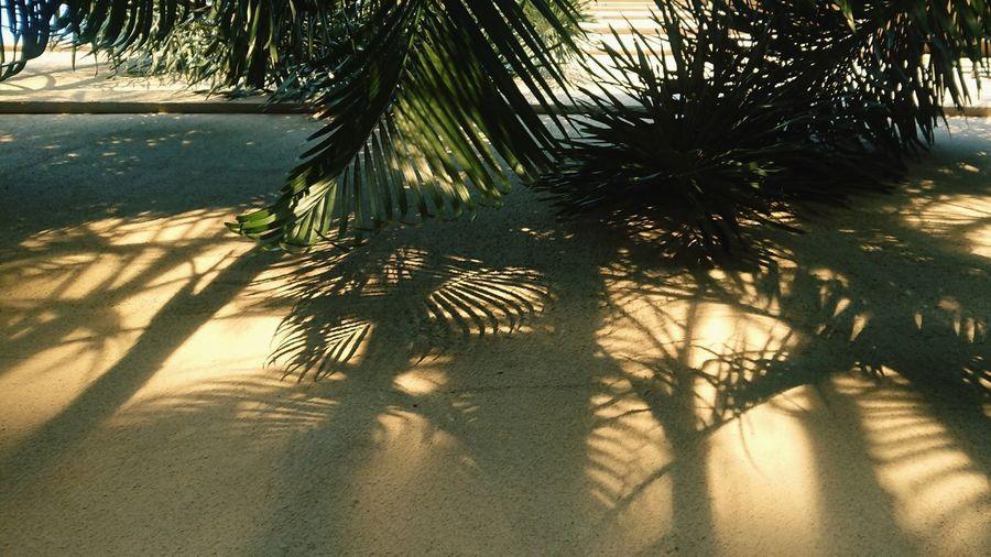 Sunlight falling on palm trees