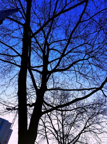 Art is Everywhere Art Beauty Sighn Street Building Pattern Lines Shapes Colors Sky Bare Tree Tree Branch Low Angle View Sky Silhouette Nature No People Outdoors Day Beauty In Nature Tree Trunk