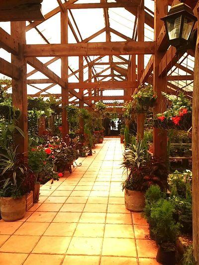 EyeEmNewHere Plants Indoors  Hall ZAO Wood Vivero Bonanza