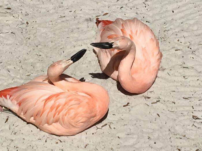 EyeEm Selects Bird Animal Vertebrate Animal Themes Land Nature