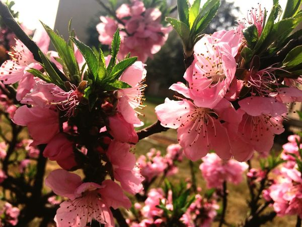 Blooming Beautiful Spring