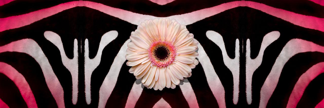 Abstract Bazaar Floral Flower Gerberdaisies Skin And Ha Wildlife Zebra Zebra Pelt