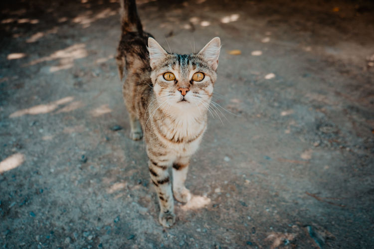 #cat #freedom #animal #rue Pets Portrait Feline Domestic Cat Looking At Camera Kitten Ginger Cat Animal Themes Stray Animal Yellow Eyes Tabby Cat Undomesticated Cat Animal Eye Cat Family Captive Animals
