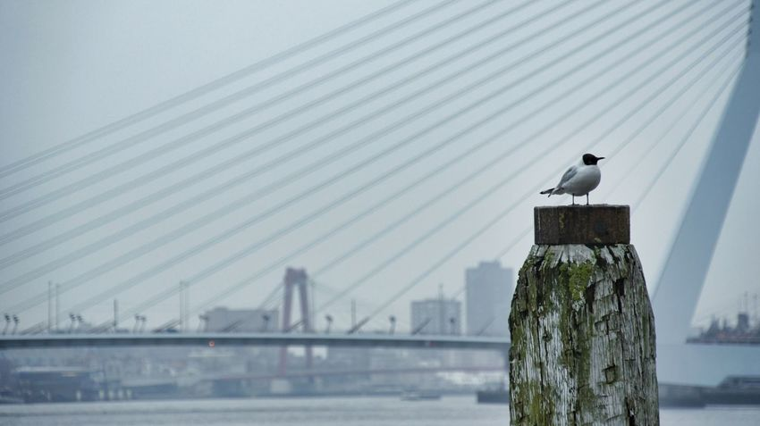 Bridge Seagulls Harbour Near And Far From Where I Stand Cityscape Skyline Better Together Animal Photography Bird Photography