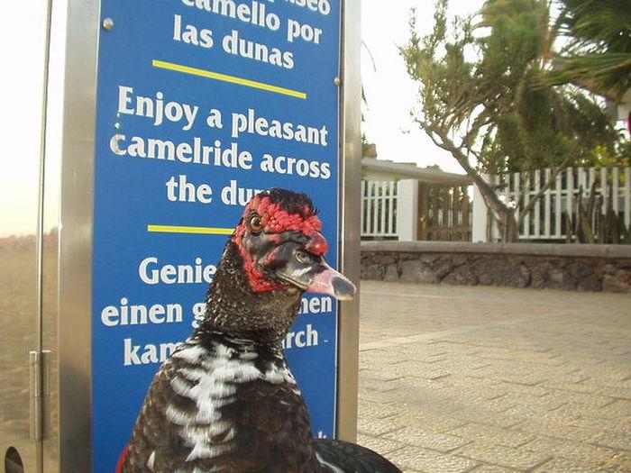 Beach Gran Canaria Maspalomas Dunas Maspalomas Comments Welcomeotto