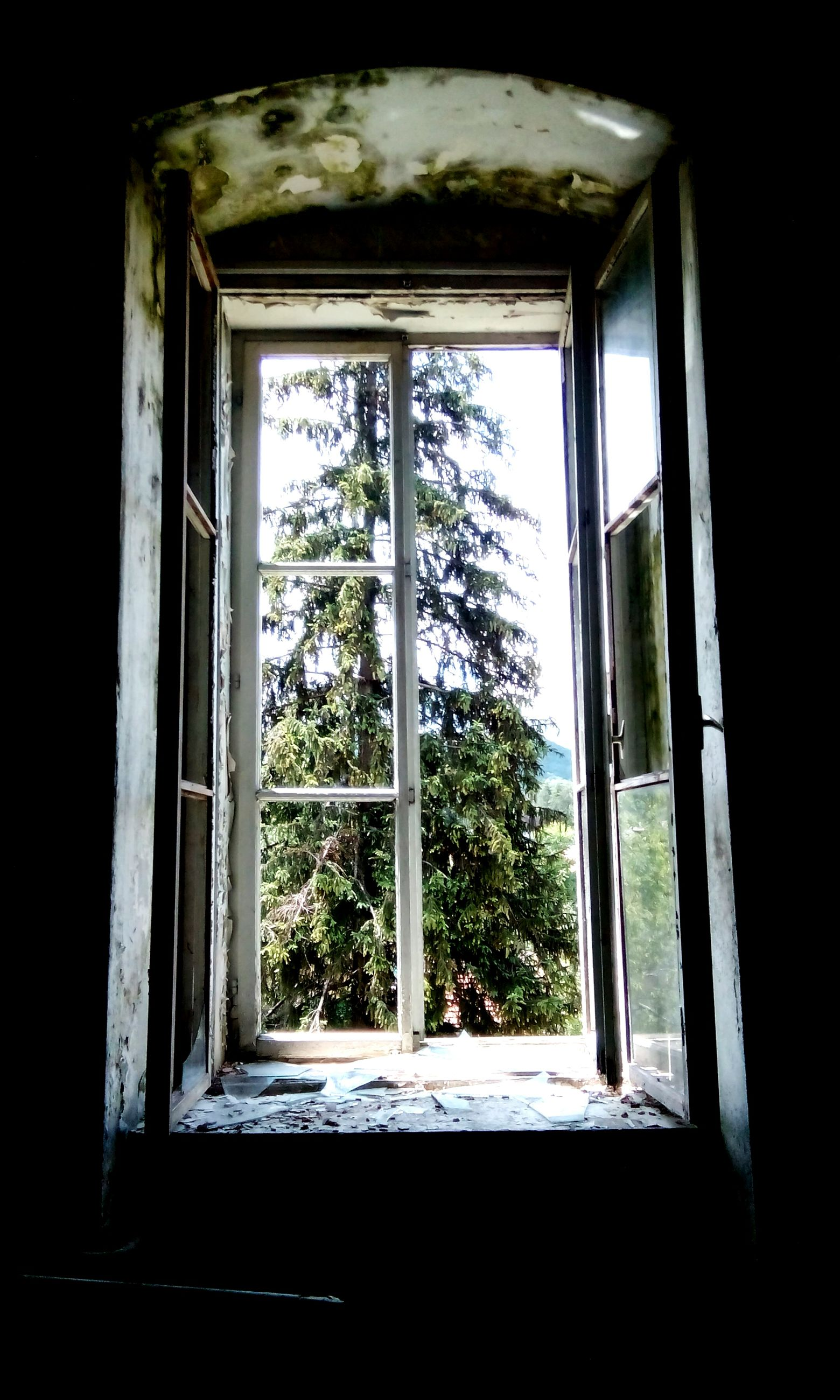 window, indoors, glass - material, transparent, built structure, architecture, house, window frame, home interior, tree, day, closed, growth, no people, sunlight, dark, curtain, low angle view, open, plant