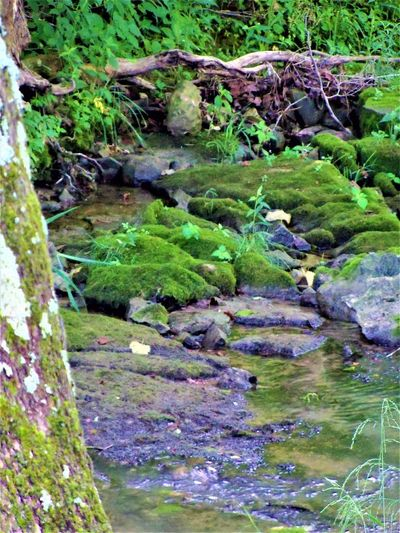 The Creek Creek Creekside Indiana Nature Beauty In Nature Creek Life Creek Photography Creek View Creekbed Creeks Day Forest Land Moss Nature No People Outdoors Plant Rocks Rocks And Water Rocks In Water Stream Tranquility Tree Water
