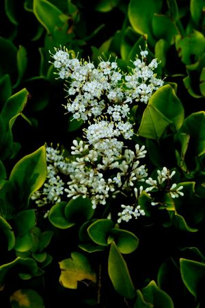 white flower. Beijing, China Fujifilm_xseries Flower Beauty In Nature Fujifilm X-E2 White Flowers And Buds