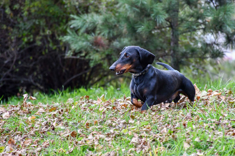 The look Autumn Lowangle Day Pets Dog Dachshund