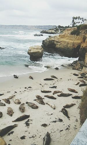 Seals View Ocean Check This Out Cool Latepost