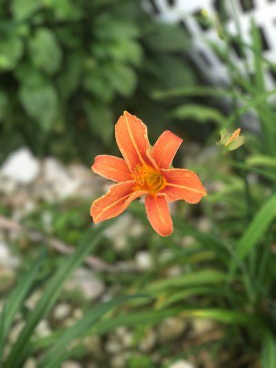 Flower Plants Nature