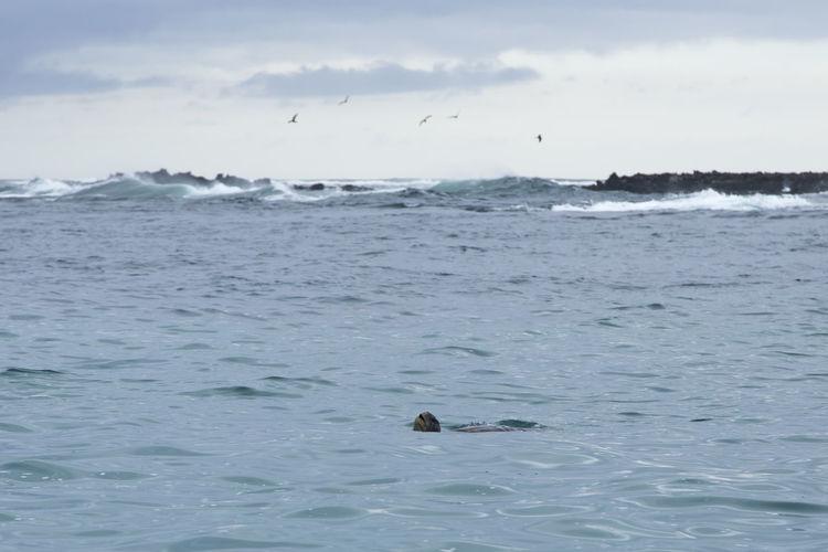 Galapagos green