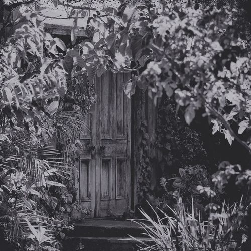 into the forest Blackandwhite Blackandwhite Photography Bnw_doors Bnw_friday_eyeemchallenge Building Exterior Creeper Plant Day Door Fragility Growth Hidden Hidden Places Ivy Leaf Nature No People Old Door Outdoors Pentax Plant Plants Steps Tree Wood - Material