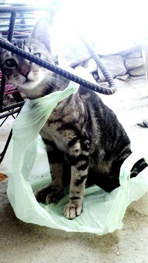 Mi gata cuando escucho que me hablaron k fuera a comer misiote......;-)