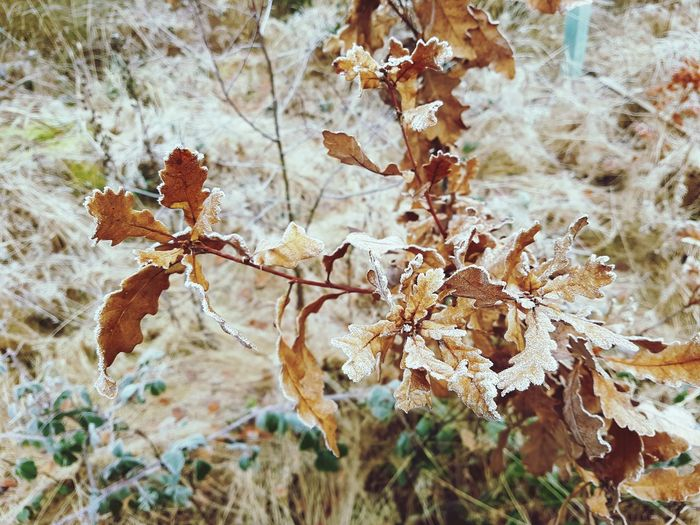 Beauty In Nature Forestwalk Frozen Leaves