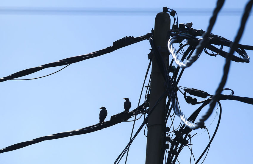 Silhouette. Bird perch at the electricity cable Animal Animal Themes Animal Wildlife Animals In The Wild Cable Complexity Connection Day Electrical Equipment Electricity  Electricity Pylon Fuel And Power Generation Low Angle View Nature No People Outdoors Perching Power Line  Power Supply Silhouette Sky Technology Telephone Line