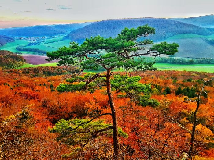 Nature Landscape Outdoors Tree Beauty In Nature No People Maienwand Eichsfeld Eichsfeld Colors Autumn