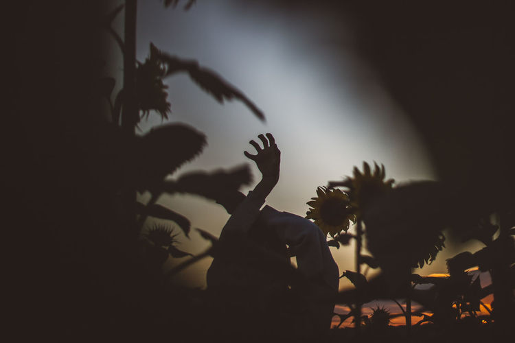 Woman Body Part Human Body Part Hand Hands Field Sunflower Sunflower Field Silhouette Real People Plant People Human Hand Lifestyles Arts Culture And Entertainment Men Performance Nature Leisure Activity Outdoors Group Of People Tree Women Night Gesturing Adult Arms Raised Stage