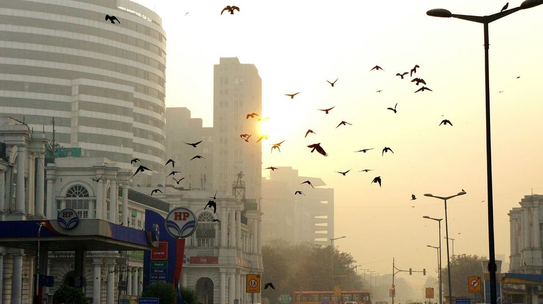 Dawn Sunrise Birds Streetphotography Mirrorless Capture The Moment Urban Photography Eyem Best Shots Check This Out Morning Sky CannaughtPlace Delhi, India Light And Shadow Scenic View Learn & Shoot: Simplicity Showcase: November