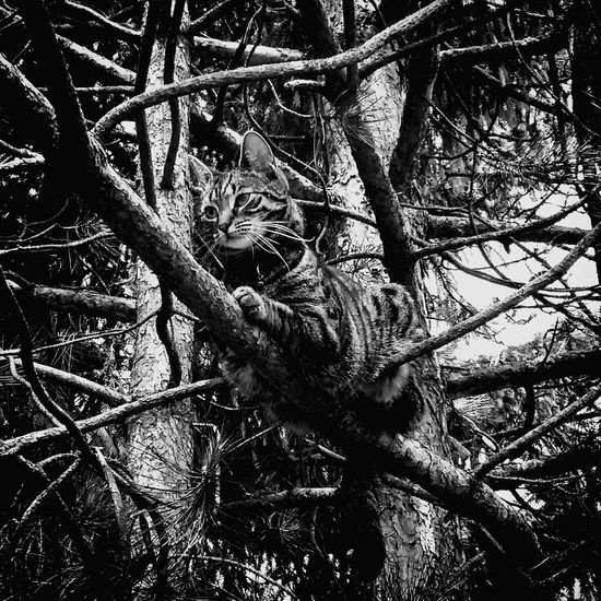 Wild Cat Mimicry Nature Tree Branches Captured Animals Hunting Predator Comfortable Place Pattern Pet Portraits