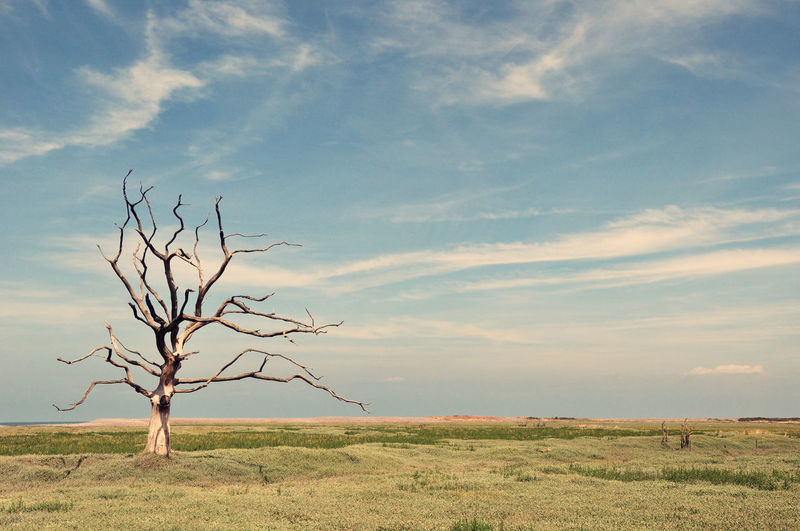 Dead tree on a marsh Dead Tree Life Loneliness Lonely Marsh Tree Bare Tree Beach Beauty In Nature Bleak Branch Dead Plant Isolated Landscape Nature Sea Sky Tranquil Scene Tranquility