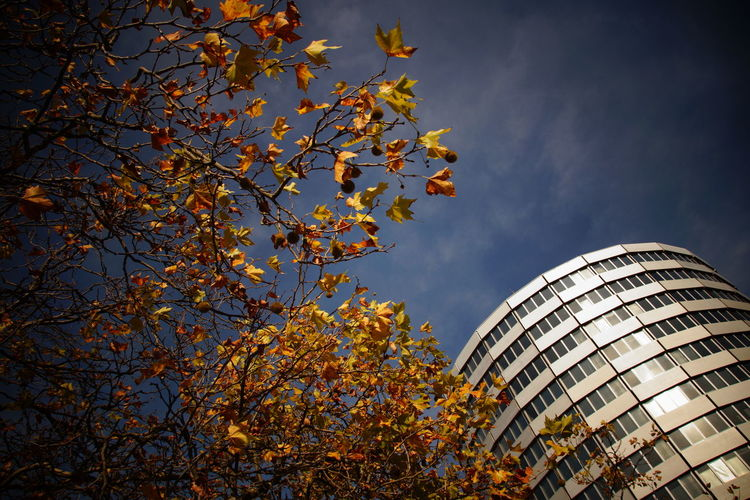 Low angle view of autumn tree and modern building against sky