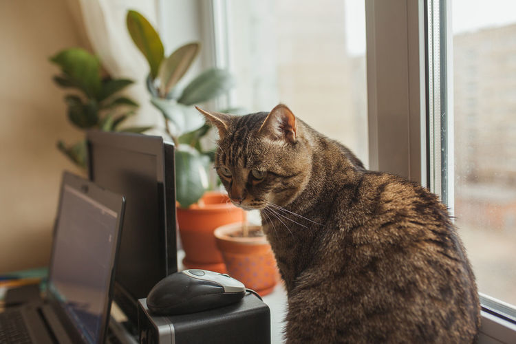Cat sitting on table at home while human is working at home