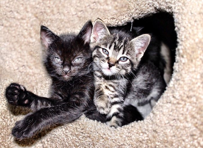 Two Kittens Fosterkittens Kittens Kittensnuggles Cat Domestic Cat Pets Domestic Feline Domestic Animals Animal Themes Animal Mammal Relaxation Lying Down Vertebrate Portrait Whisker Cute Young Animal Close-up Looking At Camera No People A New Beginning