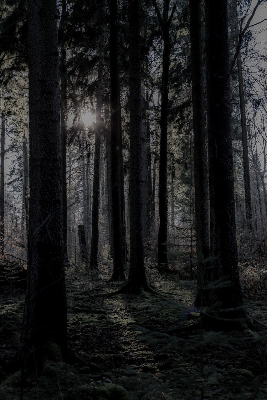 forest, tree, land, plant, trunk, tree trunk, woodland, nature, tranquility, no people, tranquil scene, growth, scenics - nature, beauty in nature, dark, non-urban scene, day, outdoors, spooky, environment