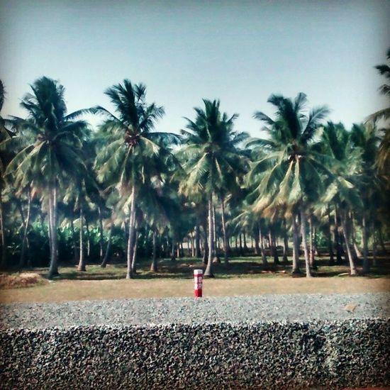 En route Bangalore. Wondersoftamilnadu Chennaiexpress Indianrailways Southindia India Coconuttrees Hotsummerday
