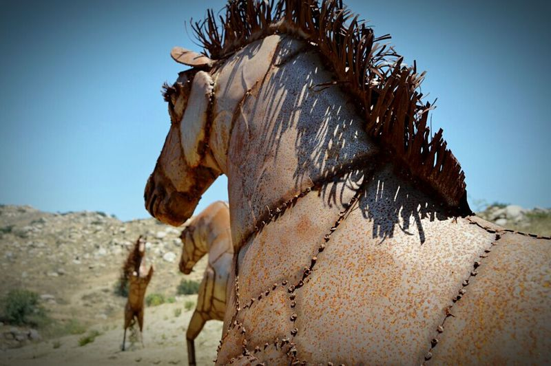 Statue Close Up Animal Statue Hidden Treasure Amazing Discoveries Discover Your City Wild Horses The Great Outdoors - 2015 EyeEm Awards From My Point Of View