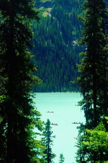 Boats on Lake Louise Boats Boat Lake Glacier Glacial Water Trees Tree Louise Like Follow